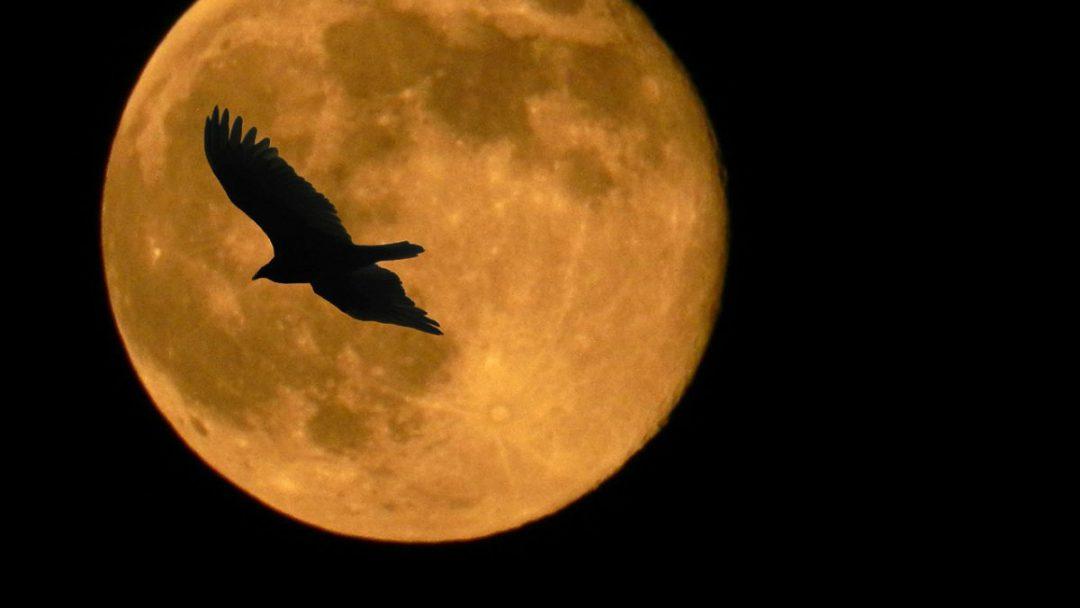 Dziś niezwykła pełnia Księżyca, tzw. superpełnia! – Miejsca we Wrocławiu.