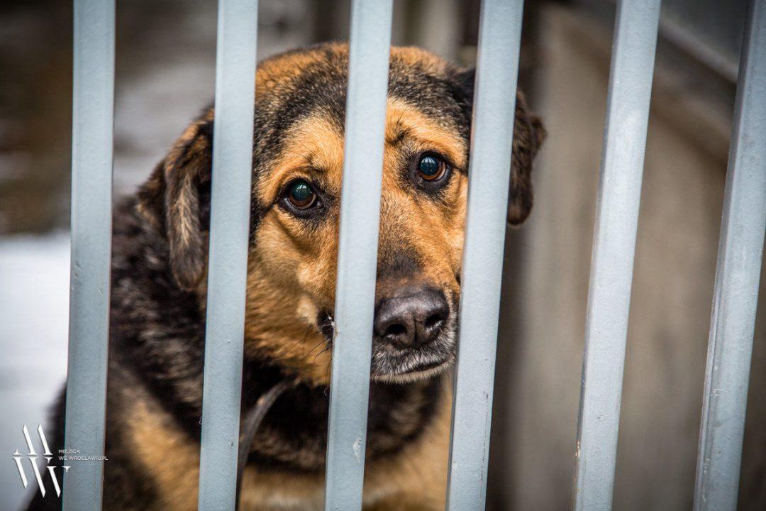 Psy i koty we Wrocławskim schronisku, czekają na nowy dom…[ZDJĘCIA] – Miejsca we Wrocławiu.