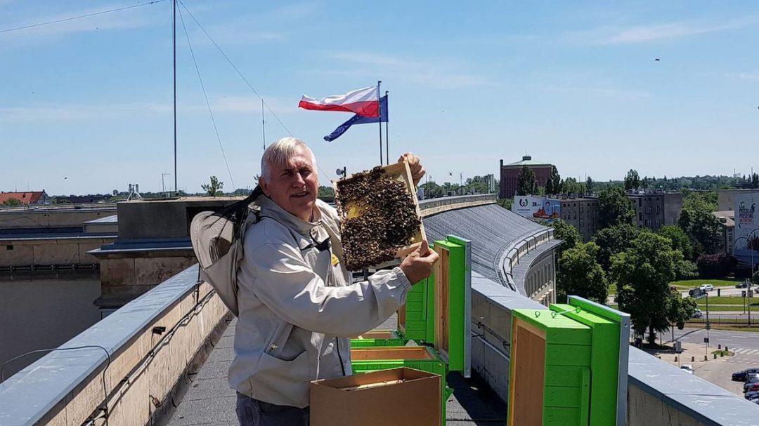 Na dachu Urzędu Wojewódzkiego zamieszkały pszczoły.