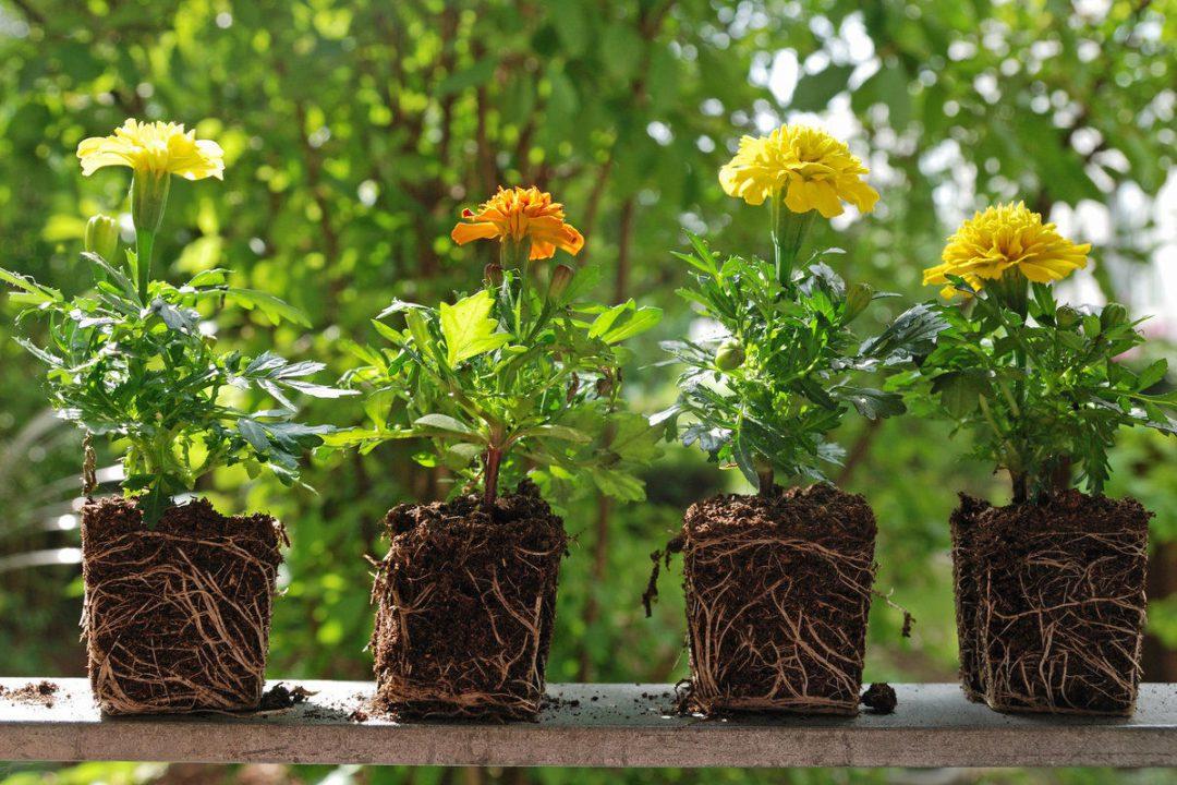 Ruszają punkty, w których wymienimy się roślinami. – MiejscaWeWroclawiu.pl