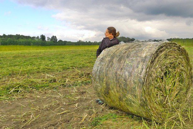 Wrocławski Ogród Botaniczny jako pierwszy w Polsce przetestuje… konopie. – MiejscaWeWroclawiu.pl
