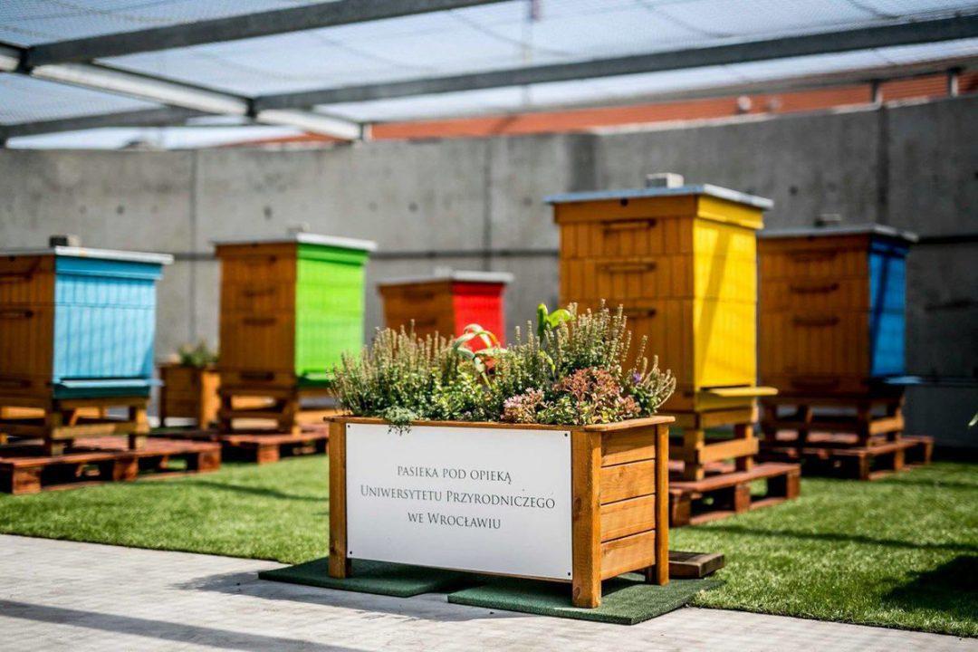 Na dachu galerii Wroclavia powstały pasieki z pszczołami. – MiejscaWeWroclawiu.pl