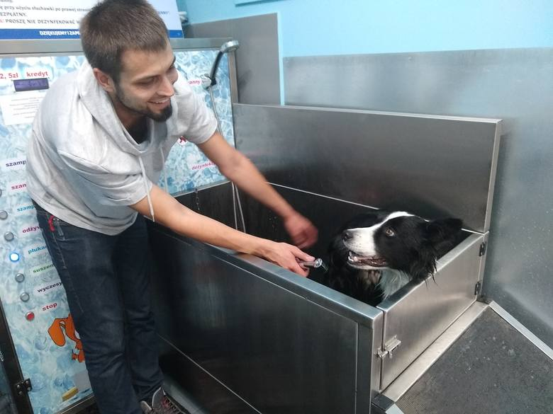 """Otwarto pierwszą """"Myjnie dla psów"""". – MiejscaWeWroclawiu.pl"""