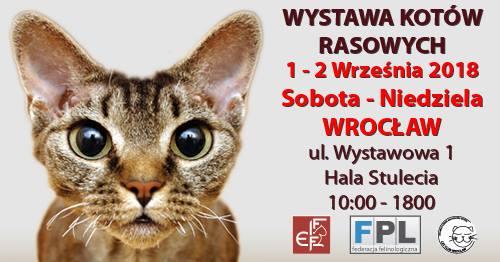 Międzynarodowa wystawa kotów rasowych już we wrześniu! – MiejscaWeWroclawiu.pl