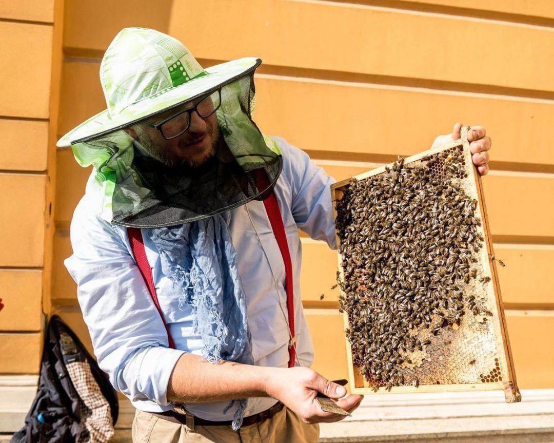 Aż 80 tysięcy pszczół zamieszkało we Wrocławiu. – MiejscaWeWroclawiu.pl