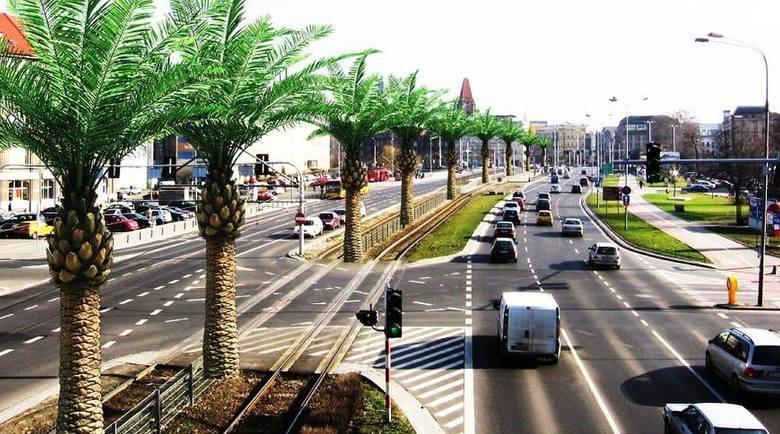 Czy na ulicy Legnickiej powstaną palmy?