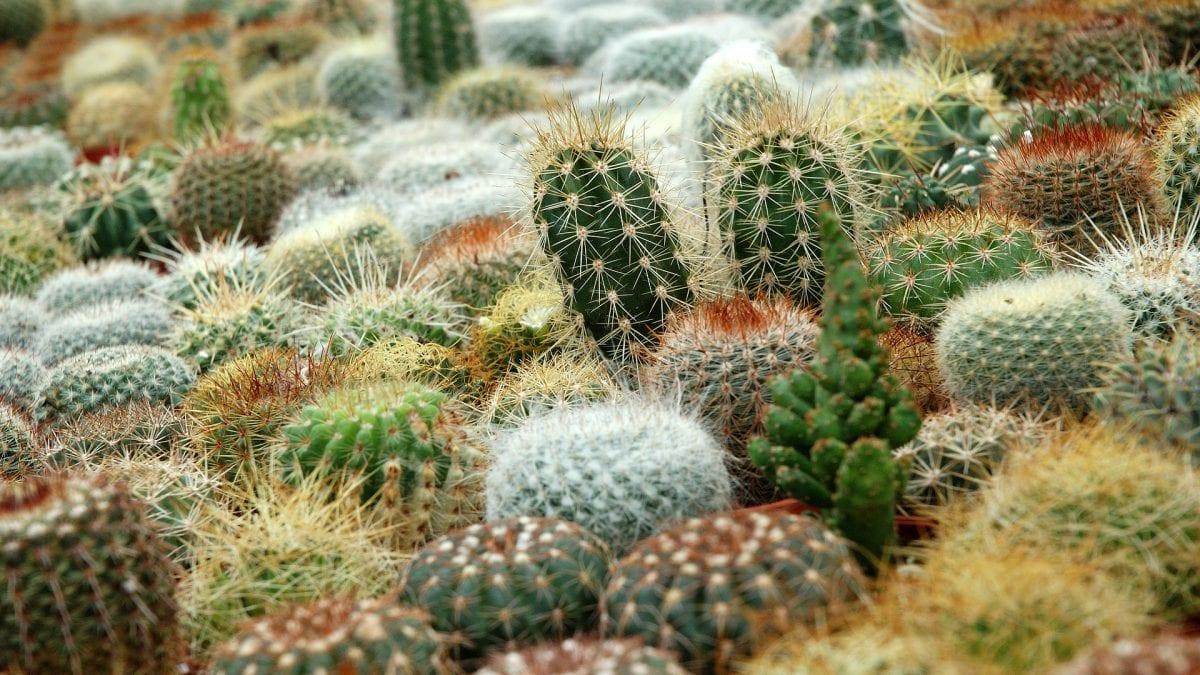 Remont w Ogrodzie Botanicznym UWr. Powstaną nowe szklarnie dla kaktusów.