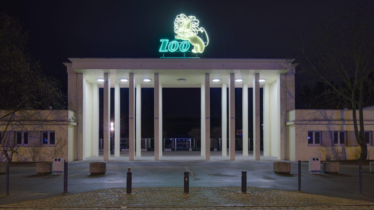 Ryk lwa przywita pasażerów na przystanku ZOO.