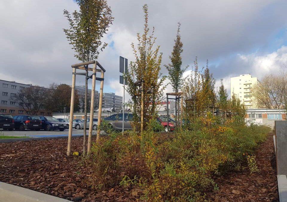 Ponad sto nowych drzew i pół tysiąca krzewów pojawiło się we Wrocławiu.