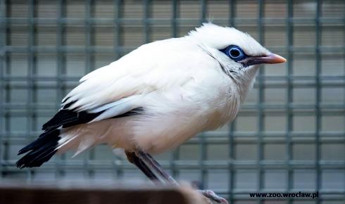 W ZOO Wrocław urodził się jeden z najrzadszych ptaków świata.