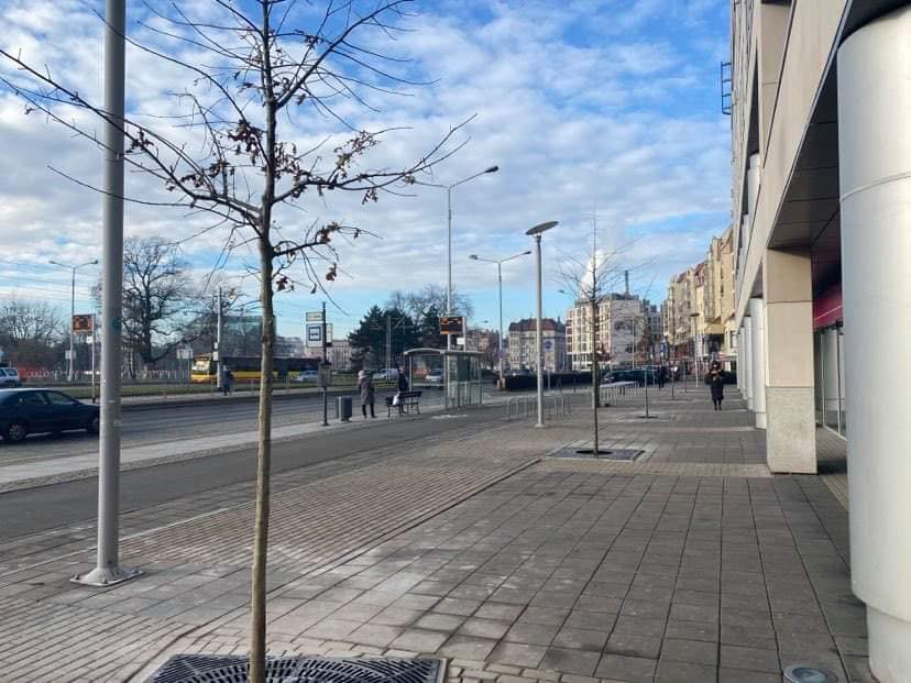 """Z chodników przy placu Bema """"wyrosły"""" drzewa."""