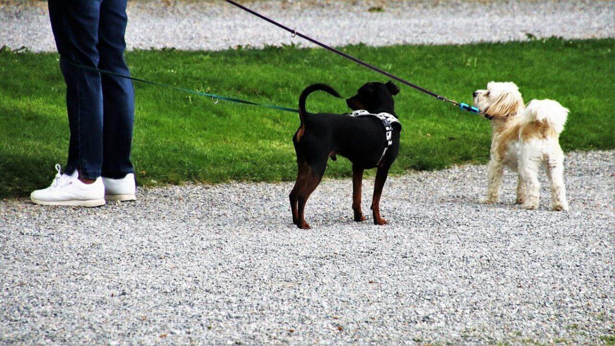 Wychodzisz na spacer z psem? Uważaj na wysokie mandaty!